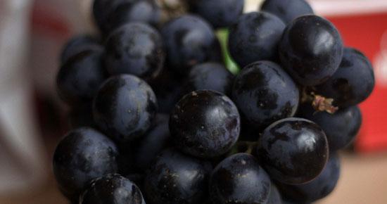 Сорта винограда в Чили